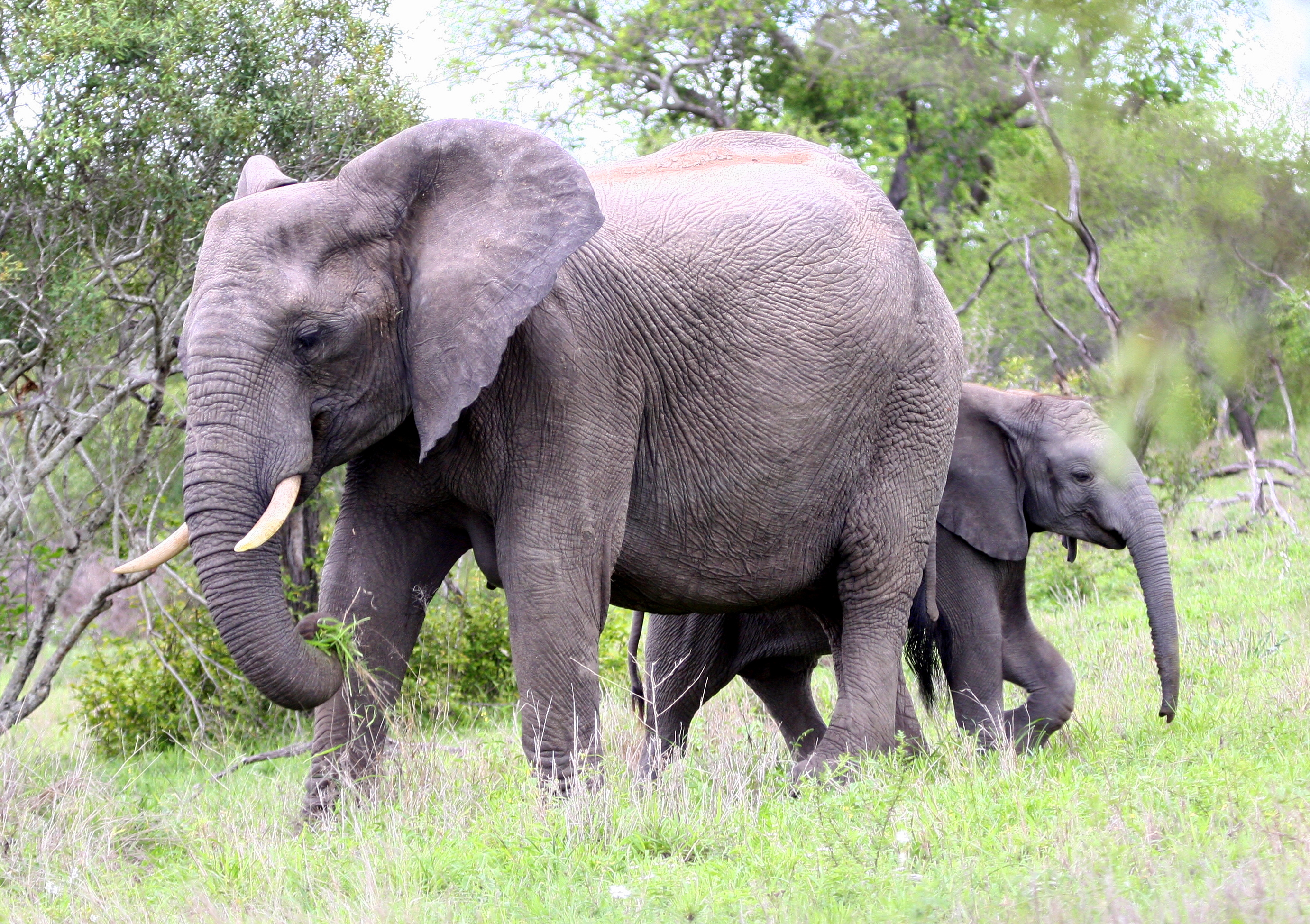 The Value of Small Wins (or, How to Eat an Elephant)